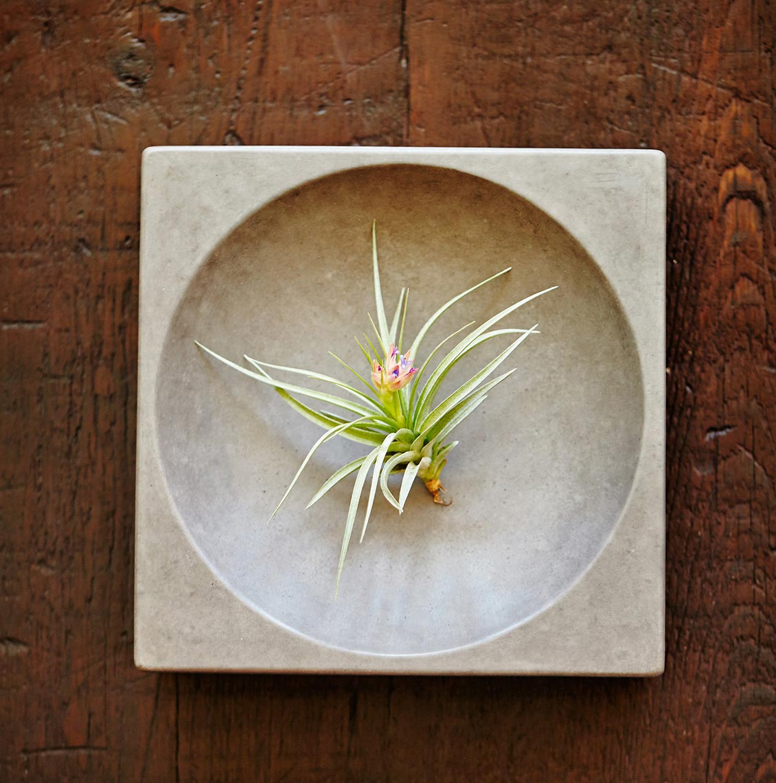 Product Photography Still Life Succulent Dish Daylight Studio Target Stores Chicago